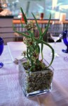 EL Ideas Chicago -Miniature shallot centerpiece.