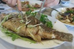 Deep Fried Sea Bass with sauce no spice $23.00