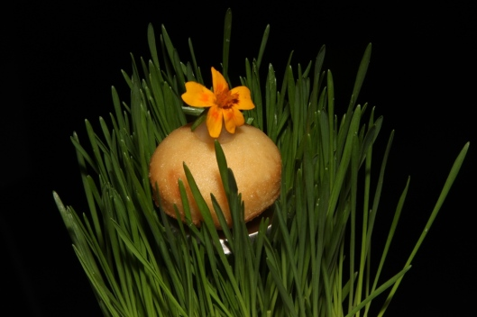 Amuse-Bouche - beignet, white truffle mousse, edible marigold flower, wheatgrass
