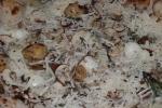 Cremini Mushroom – mozzarella di bufala. gorgonzola, roasted garlic, thyme, rosemary, pecorino (part of Lunch Prix Fixe + $5.00) or $17.00